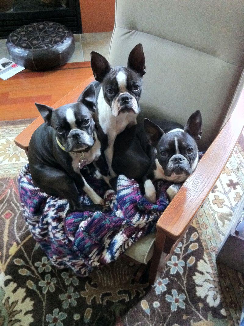 The three amigoes